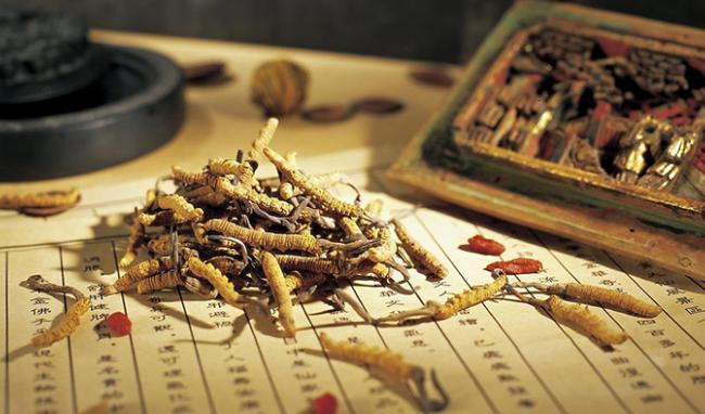 10 tiêu chí phân biệt Đông trùng Hạ thảo Tây Tạng và nhộng trùng thảo nuôi cấy